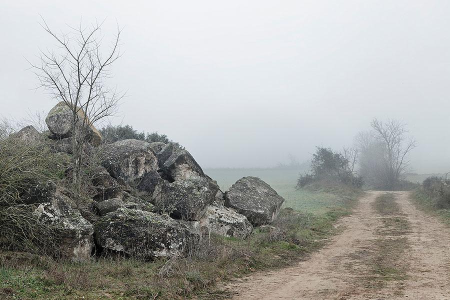 L'Alzina de Ribelles, 2012